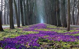 Aperçu fond d'écran Parc paysage de printemps, arbres, fleurs, crocus, chemin
