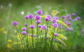 Preview wallpaper Purple flowers bloom, grass, spring