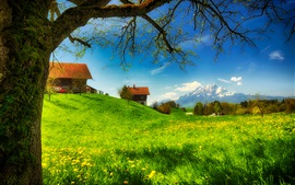 Spring greens, houses, grass, mountains, flowers, tree, meadow, sunny Wallpapers Pictures Photos Images