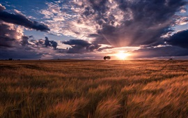 Preview wallpaper Summer, fields, sunset, nature landscape