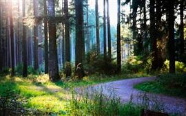 Verano, bosque, camino, sol
