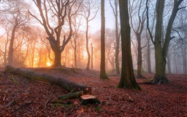 Preview wallpaper Sunrise in the forest, trees, fog, morning