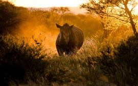Preview wallpaper African, sunset, sunlight, rhinoceros