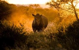 Aperçu fond d'écran Africains, coucher du soleil, la lumière du soleil, de rhinocéros