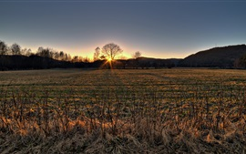 Preview wallpaper Autumn, dry grass, fields, trees, sunset, hills