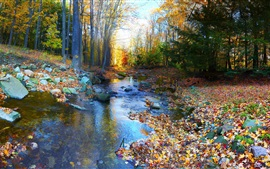 Preview wallpaper Autumn landscape, forest, trees, colorful, foliage, river, stones