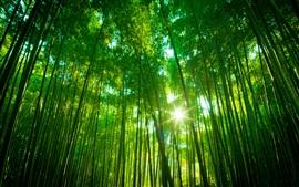Бамбуковые леса, зеленый пейзаж природа