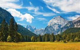 バイエルンアルプス、草、フィールド、木、空、雲