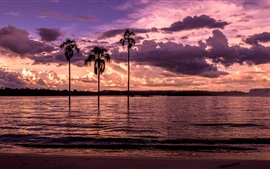 Preview wallpaper Beach, bay, palm trees, sunset, purple