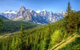 Canadá, montanhas, árvores, floresta, céu azul, Banff Park