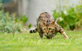 Preview wallpaper Cat sneak in grass