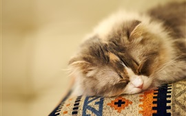 Preview wallpaper Fluffy cat sleeping