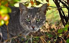 Os olhos verdes rosto do gato, árvores, luz solar