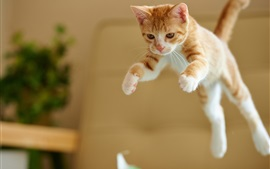 Preview wallpaper Kitten jumping