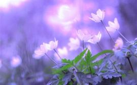 Aperçu fond d'écran Fleurs du matin, feuilles, bokeh