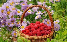 Red raspberries, basket, flowers