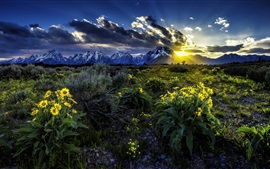 Preview wallpaper Rocky Mountains, Grand Teton National Park, flowers, dawn, sunrise