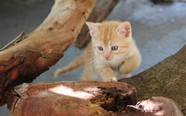 Preview wallpaper Tree stump, kitten