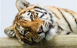 Preview wallpaper Amur tiger, eyes, face close-up
