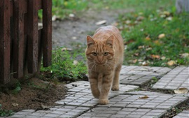 Preview wallpaper Cat walking in the village