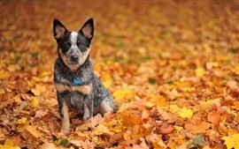 Симпатичные черная собака в желтые листья землю