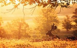 Deer, mañana, árboles, rayos del sol