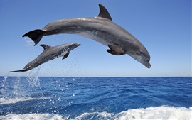 Dolphins jumping out the water, spray, sky, horizon