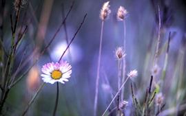 Трава, цветы, розовый и белые ромашки