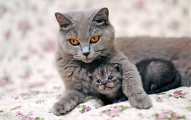 Preview wallpaper Gray cat mother with kitten