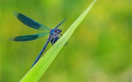 Preview wallpaper Green grass, leaves, blue dragonfly