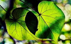 Preview wallpaper Green leaves macro, sunlight