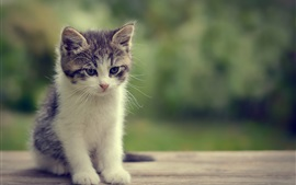 Preview wallpaper Kitten sit on table, bokeh