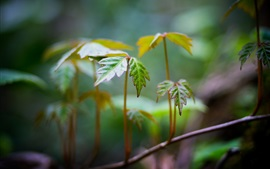 Preview wallpaper Macro leaves, bokeh