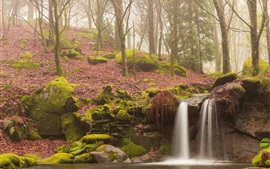 Morning forest, mist, moss, stream, waterfall