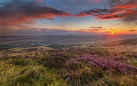Morning hills, field, flowers, coast, sunrise, dawn
