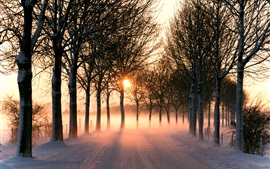 Preview wallpaper Nature winter, road, trees, light, sunset