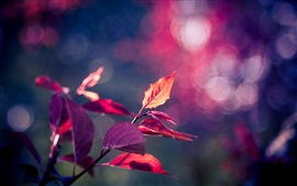 Preview wallpaper Pink purple leaves macro, bokeh