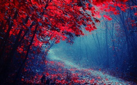 Red leaves forest, road, trees, autumn, mist, trail