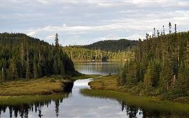 Aperçu fond d'écran Rivière, forêt, ciel, nuages, paysage de nature