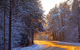 Preview wallpaper Winter forest, trees, road, sunlight, snow