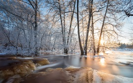 Winter, ice, forest, trees, sunlight
