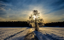Winter landscape, road, trees, sunlight