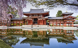 Byodo-In Temple, Japan, pond, reflection, spring, cherry