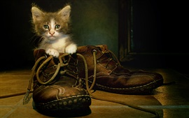 Preview wallpaper Cat in boots