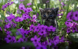 Preview wallpaper Cute kitten, purple flowers
