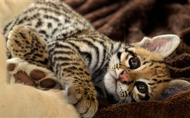 Preview wallpaper Cute ocelot, kitten, have a rest