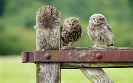 Preview wallpaper Cute owls, green bokeh