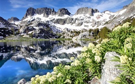 Preview wallpaper Ediza Lake, Ansel Adams Wilderness, California, USA, flowers, mountains