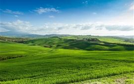 Зеленые поля, трава, природа