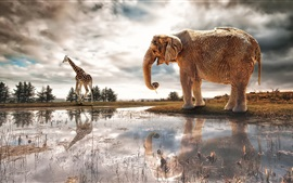 Preview wallpaper Lake, water reflection, elephant, giraffe, river